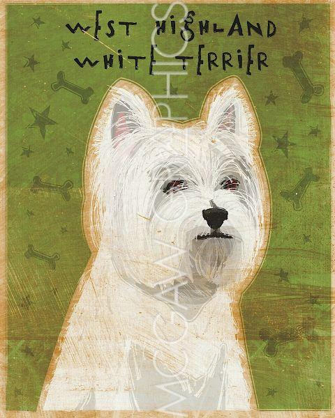 West Highland White Terrier by John W. Golden