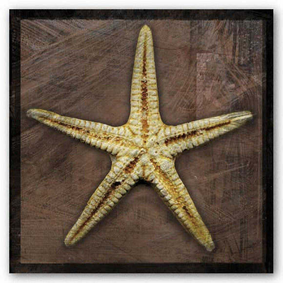 Starfish by John W. Golden