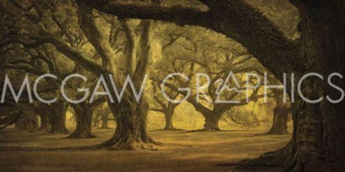 Oak Alley West Row by William Guion