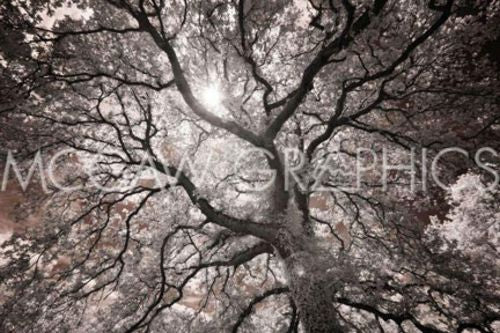 Ethereal Tree by Michael Hudson