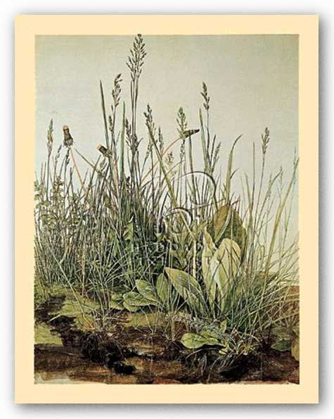 Tall Grass by Albrecht Durer