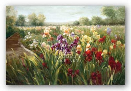 Fields of Iris by Ian Cook