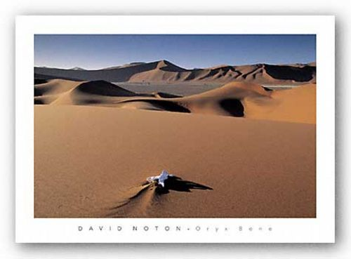 Oryx Bone, Namib Desert, Namibia by David Noton