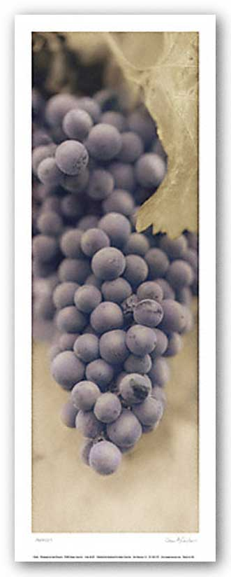 Merlot by Alan Blaustein