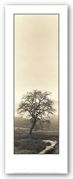 Valley Oak Tree by Alan Blaustein