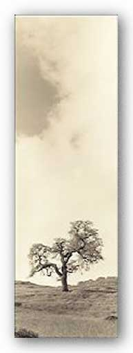 Vintage Oak Tree - Museum Wrap Canvas by Alan Blaustein