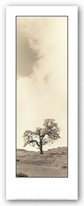Vintage Oak Tree by Alan Blaustein