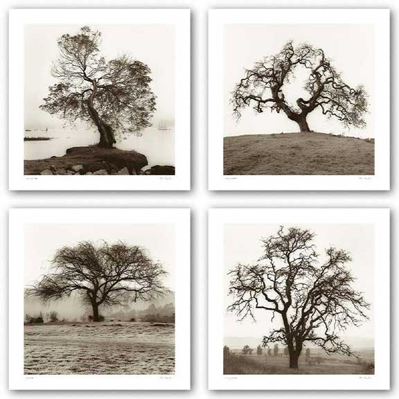 Country Oak Tree, Coast Oak Tree, Hillside Oak Tree, and Willow Tree Set by Alan Blaustein