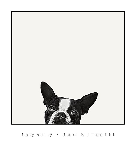 Loyalty by Jon Bertelli