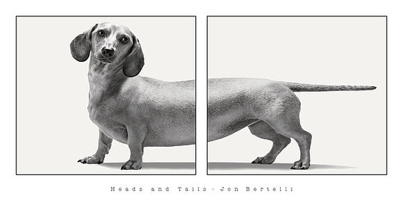 Heads and Tails by Jon Bertelli