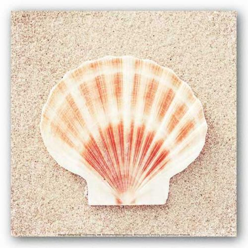 Scallop Shell by Carolyn Cochrane