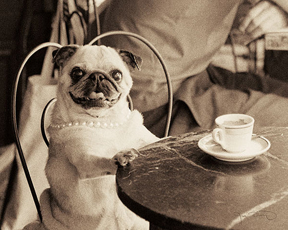 Cafe Pug by Jim Dratfield