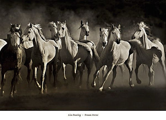 Dream Horses by Lisa Dearing
