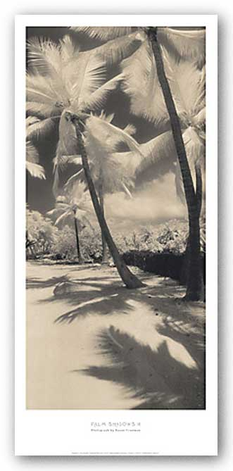 Palm Shadows II by Susan Friedman