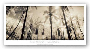Palm Paradise by Susan Friedman