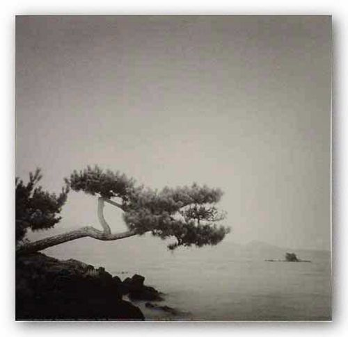 Two Branched Pine, Nakano Umi, Japan 2001 by Rolfe Horn
