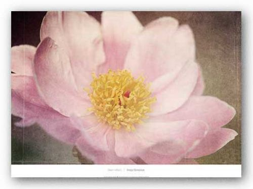 Peony in the Park by Dawn LeBlanc