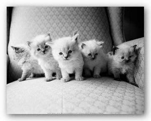 Five Kittens by Kim Levin