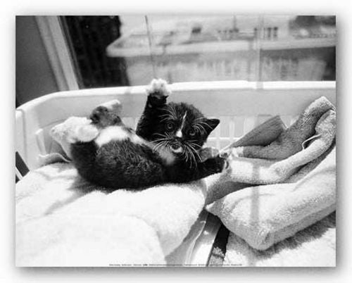 Kitten Laundry by Kim Levin