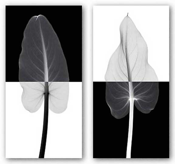 Calla Leaf Set by Steven Meyers