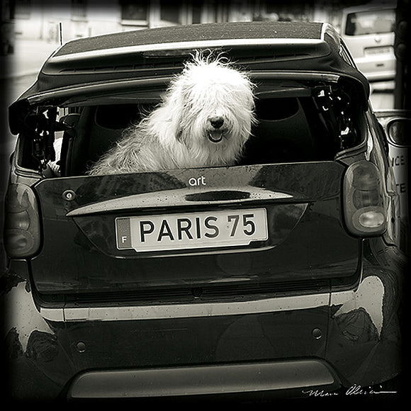 Paris Dog I by Marco Olivier