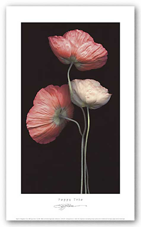 Poppy Trio by S.G. Rose