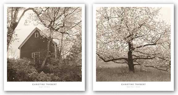 Apple Tree in Bloom and Bough and Barn Set by Christine Triebert