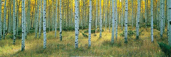 Aspens, Ashley by Alain Thomas