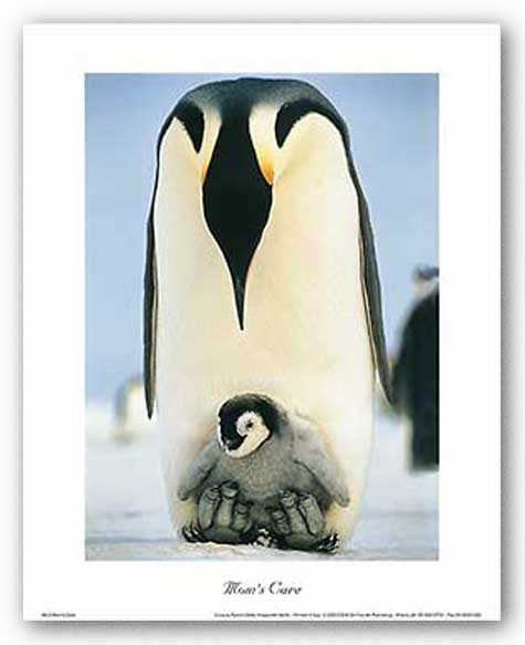 Mom's Care (Penguins)