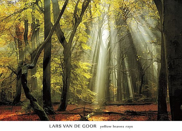 Yellow Leaves Rays by Lars Van de Goor