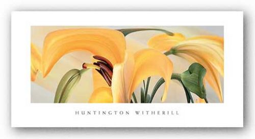 Lilies #14 by Huntington Witherill