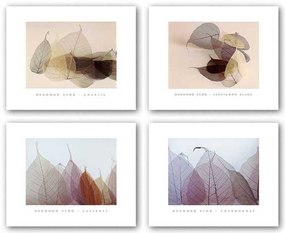 Wine Leaves Set (Four Prints) by Durwood Zedd