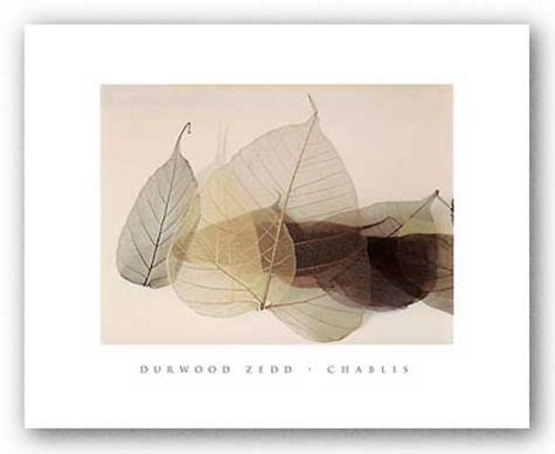 Chablis by Durwood Zedd