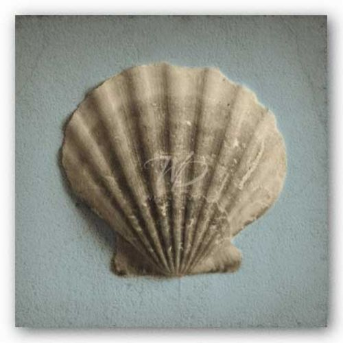 Seashell Study II by Heather Jacks
