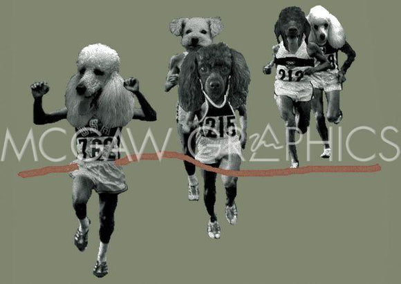 Finish Line (Dog Marathon) by Jason Laurits