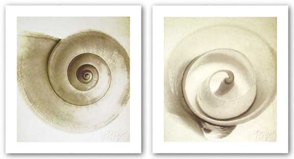 Cut Shell and Snail Shell Set by Michael Mandolfo