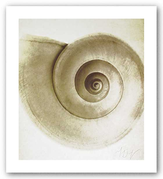 Snail Shell by Michael Mandolfo