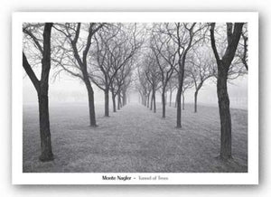 Tunnel of Trees by Monte Nagler