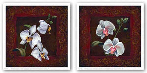 Orchid Study Set by Thomas Wood