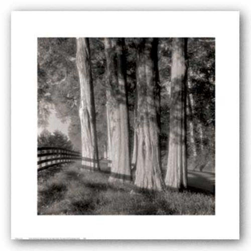 Cedars by Doug Burgess
