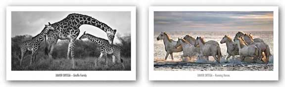 Running Horses and Giraffe Family Set by Xavier Ortega