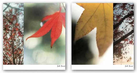 Autumn Leaves Set by Jennifer Broussard
