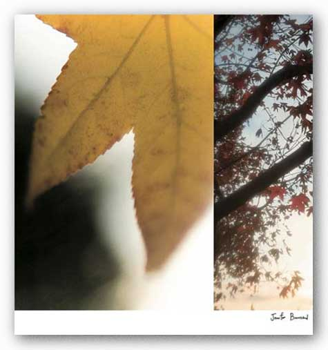 Autumn Leaves II by Jennifer Broussard