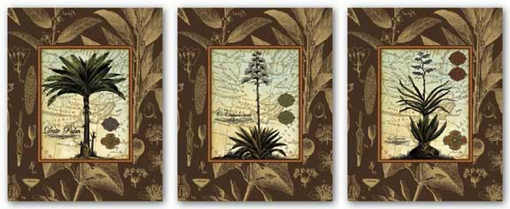 Le Grandee, Date Palm, and C. Capsolorum Set by Karl Rattner