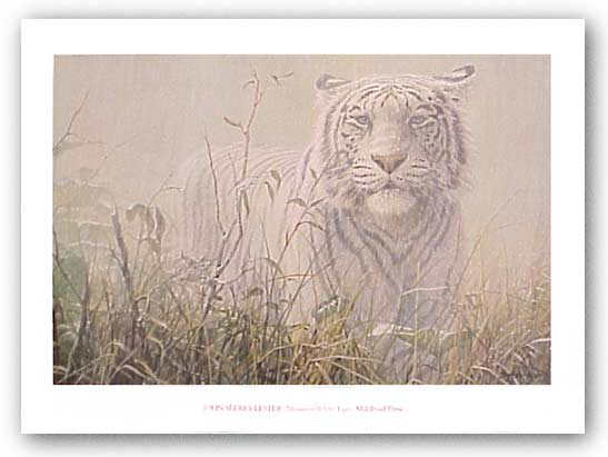 Monsoon White Tiger by John Seerey-Lester