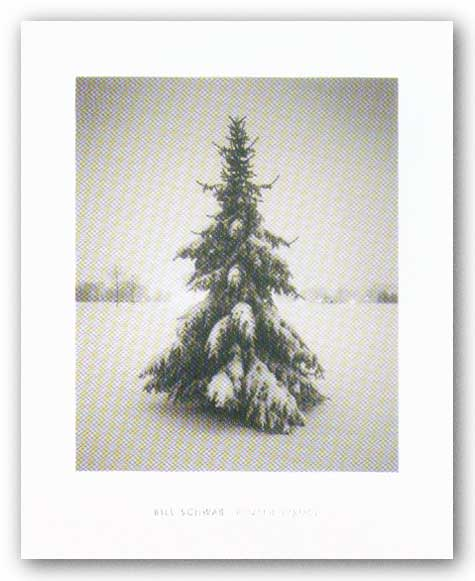Winter Spruce by Bill Schwab