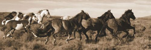 Wild Horses by Claude Steelman
