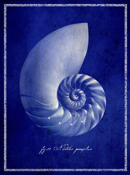 Nautilus Shell by GI Artlab