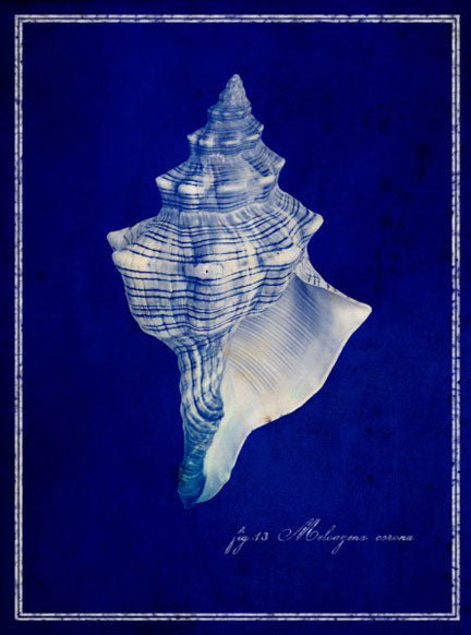 Conch Shell by GI Artlab