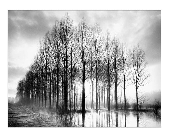 Trees in Normandy by Bill Philip